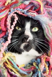 tangled cat