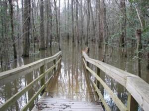 Swamp Ramp