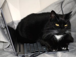 Image of cat lying on keyboard