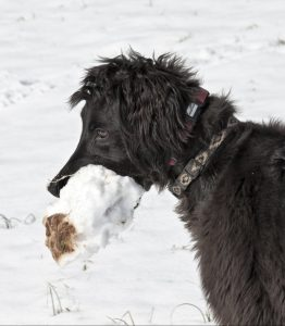 Image of taigan puppy in snow