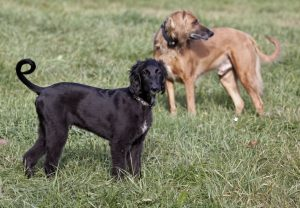 Image of two dogs